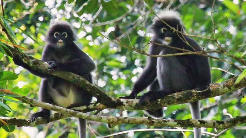Southern-Glasses-Lemurs-news-site