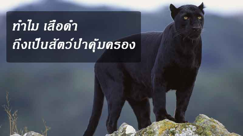 panther-news-site